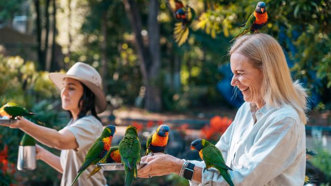 3/26Currumbin Wildlife Sanctuary Founded as the 'The Bird Sanctuary' in 1947, Currumbin Wildlife Sanctuary is now heritage-listed and holds a special place in the hearts of Golde Coast locals. Visitors also love it - especially the resident star attractions, the colourful and quirky rainbow lorikeets. Picture: Tourism and Events Queensland