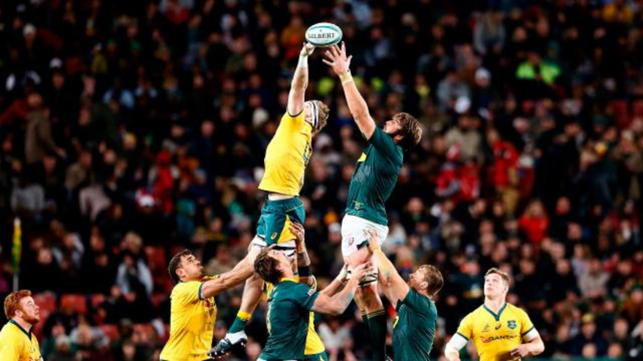 Springboks down Wallabies