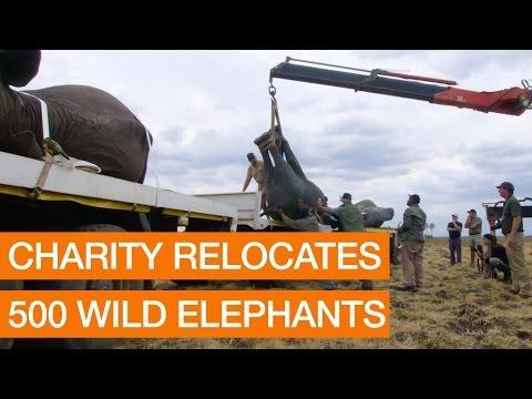 AFRICA: Charity Relocates 500 Wild Elephants Package October 18