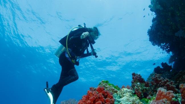 Diving in the waters of Fiji's lush Vanua Levu Island.