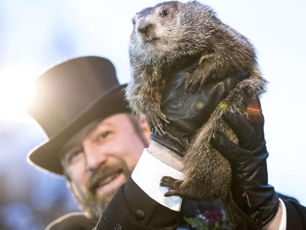 Punxsutawney Phil is held up by his handler for the crowd to see during the ceremonies for Groundhog day in Punxsutawney, Pennsylvania. Picture: Getty
