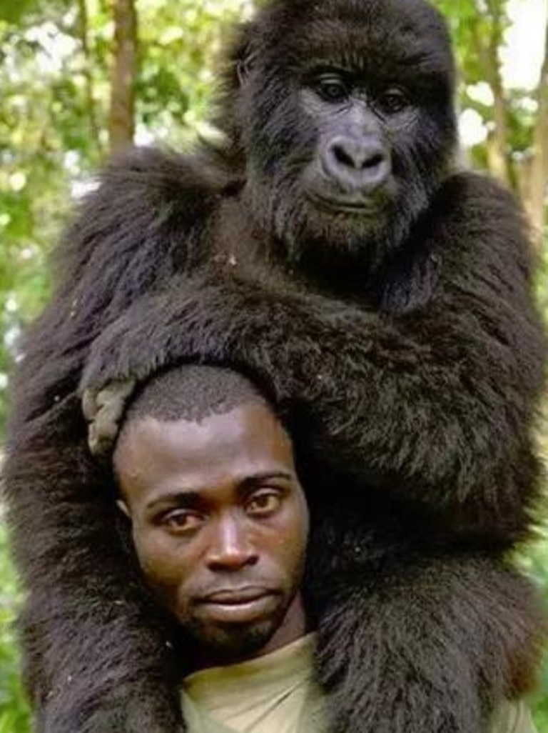 One of a series of photographs the rangers took with the gorillas they work to protect from poachers. Picture: Facebook