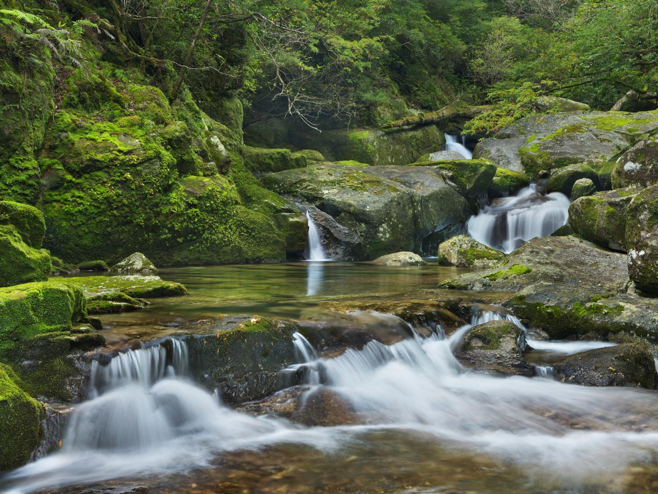 A river through lush rainforest on the southern island of Yakushima (???), Japan.