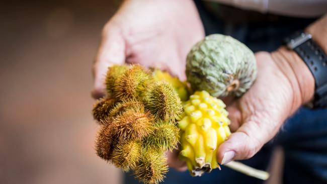 In season produce at Tropical Fruit World, Duranbah. Picture: Destination NSW