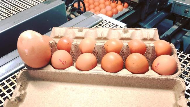 The egg was three times the size of other eggs. Source: Stockman's Eggs.