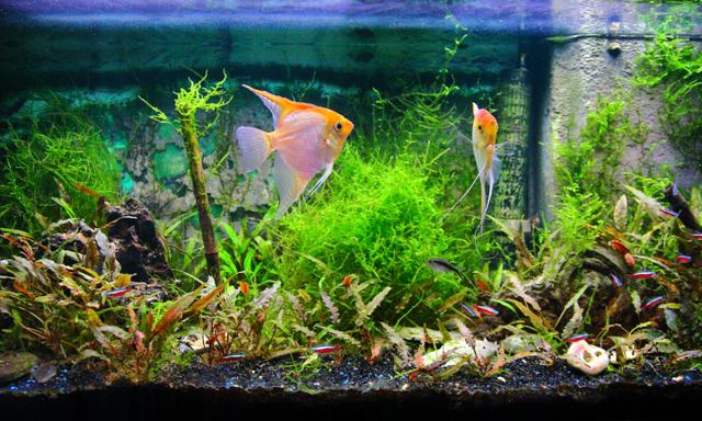 Family come down with 'mystery illness' from home fish tank