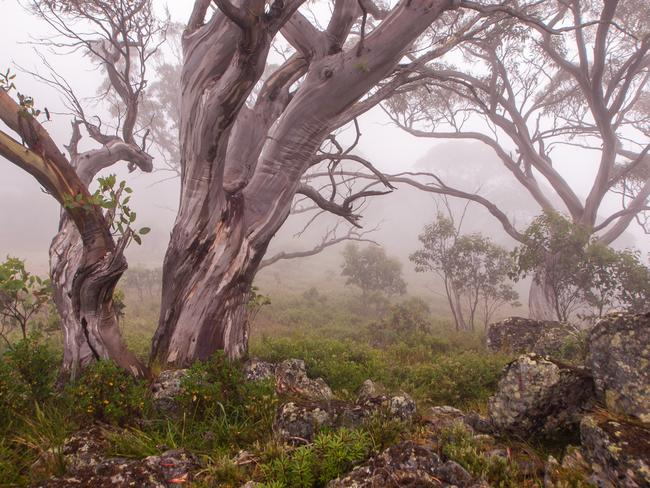 2. VICTORIAN ALPS: The original hiking plan was to walk to The Viking but thick fog descended, forcing us to stay put for a day. But the conditions were still fun to photograph in — just don't wander far off the path! Picture: Alistair Paton