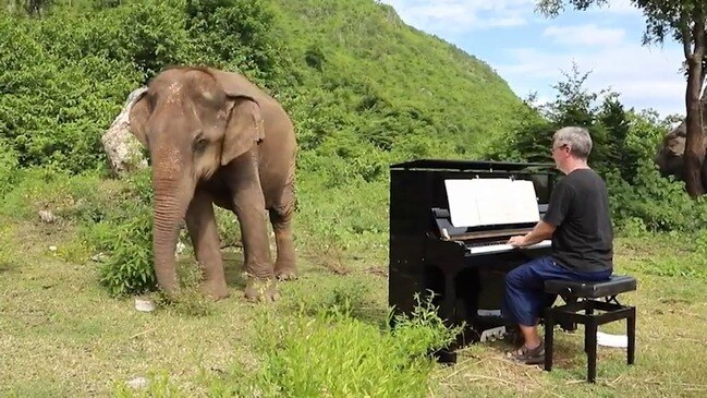 Pianist Paul Barton plays for mother and baby elephants