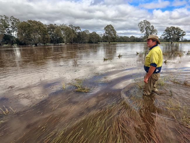 Steve Mooney on flooded farmland he leases in Everton, between Wangaratta and Myrtleford. Picture: Alex Coppel.