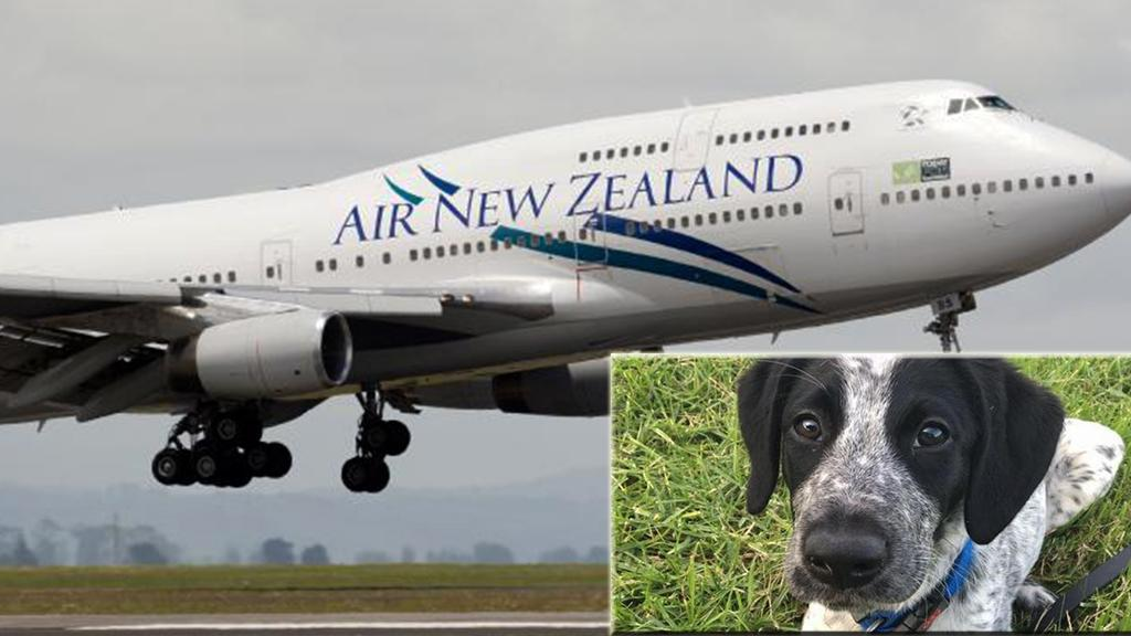Security dog shot dead at Auckland Airport