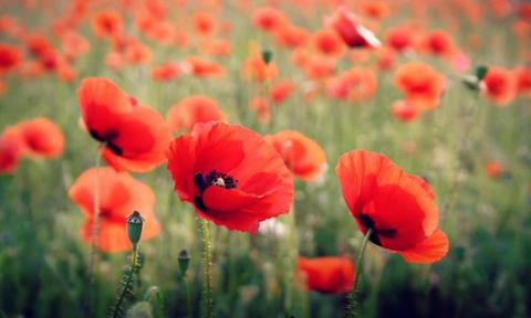 """POPPY. This one is also making its way up the ranks, coming in at number 48 last year. Its cute and cheerful demeanour will appeal to parents who look on the bright side of life. <p><a href=""""https://www.istockphoto.com"""">Credit: iStock.</a></p>"""