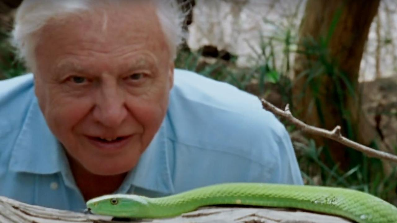 David Attenborough: A Life On Our Planet is now in cinemas. Picture: WWF/Silverback Films
