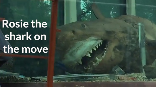 Rosie the shark on the move