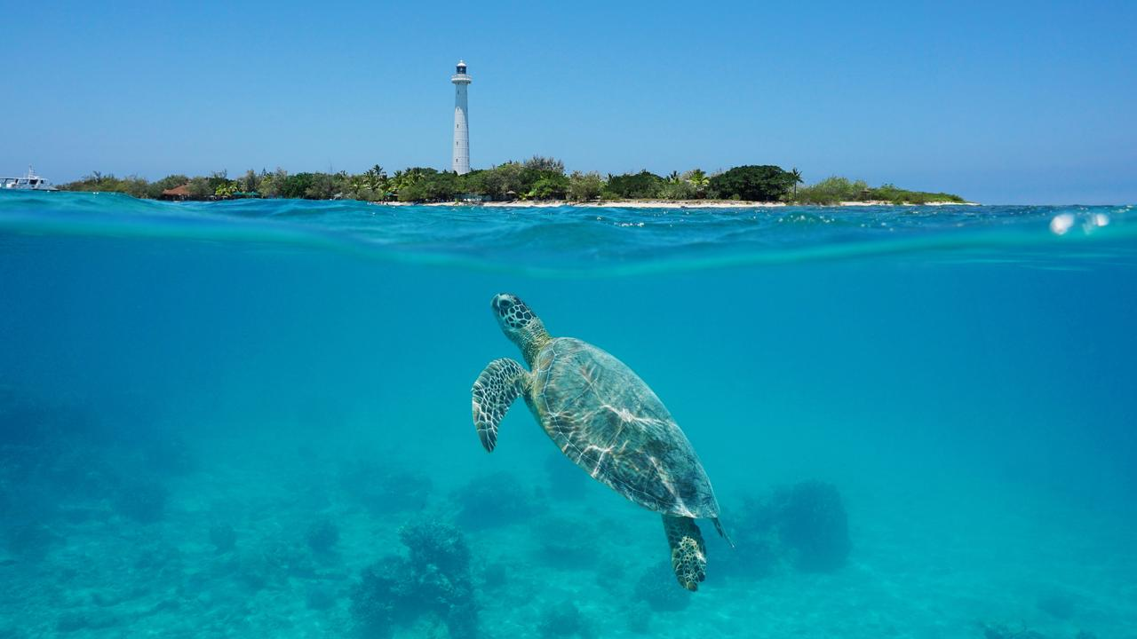 A green sea turtle underwater near Amedee island, New Caledonia, Noumea. Picture: iStock