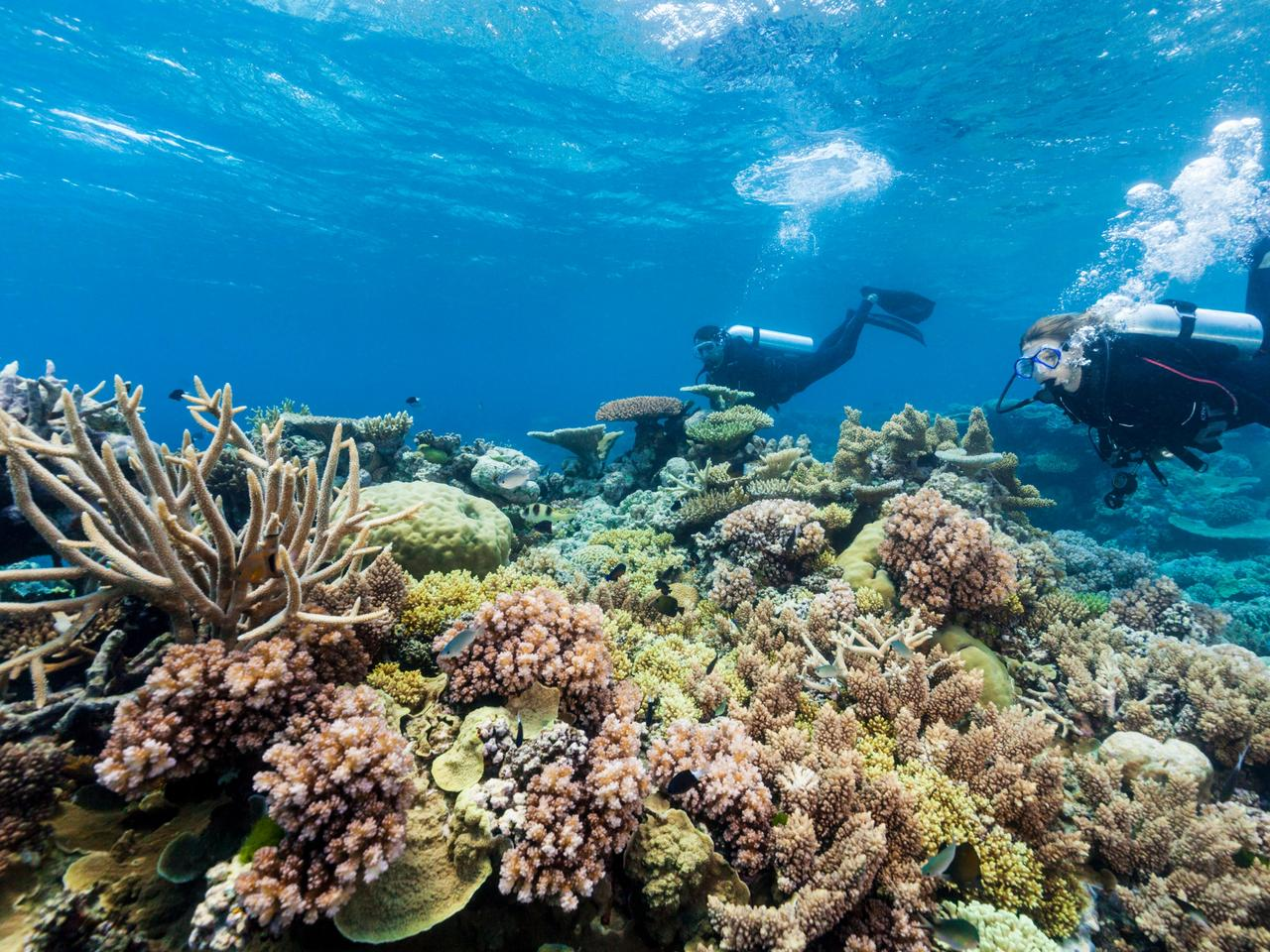 Divers exploring the coral formations of Agincourt Reef, Great Barrier Reef Marine Park, Port Douglas, Queensland, Australia