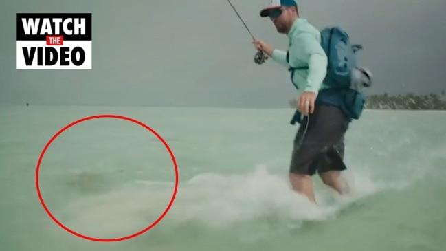 Fishermen fight off shark in ankle deep water