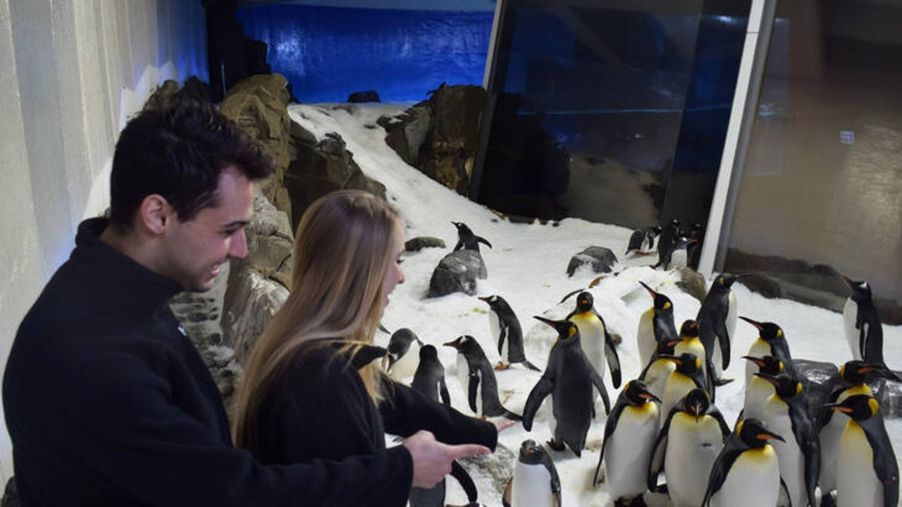 It doesn't get much better than hanging out with penguins.