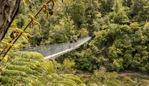 People walking on a suspension bridge in the Abel Tasman national park, New Zealand