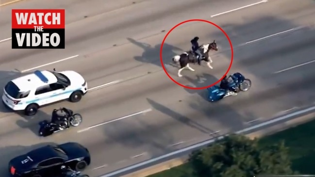 Man on horse slows traffic on Chicago highway