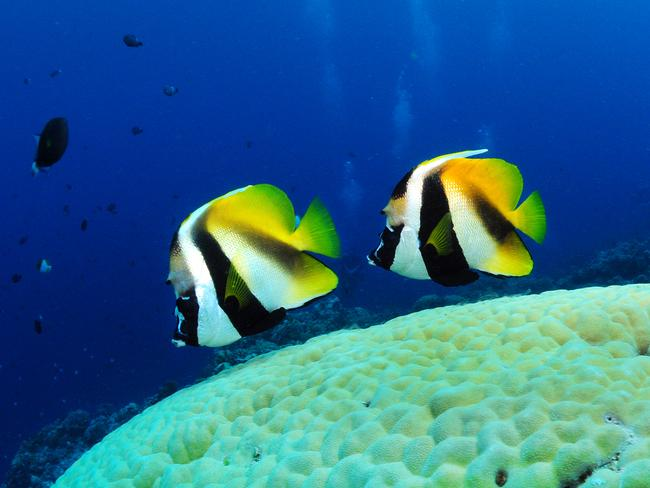 The country, which is popular with scuba divers, wants to protect its natural environment. Picture: Seanna Cronin