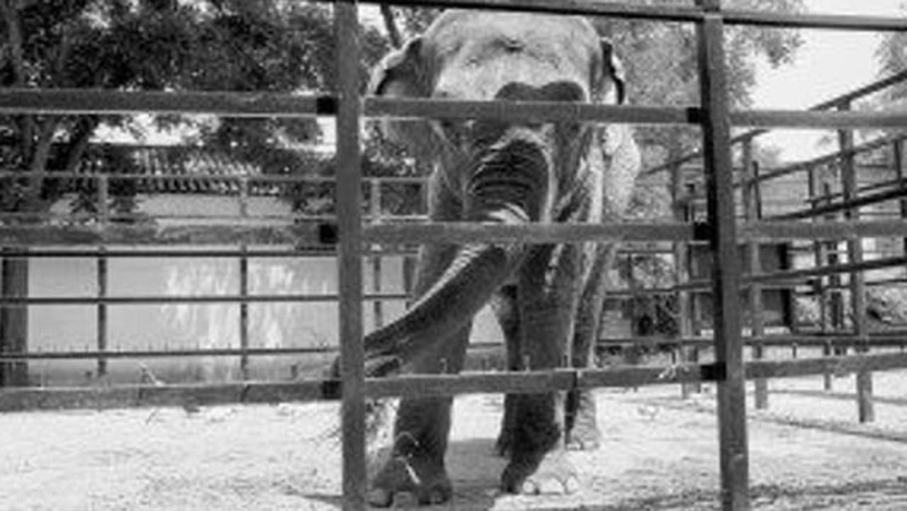 Flavia the elephant. Picture: Facebook/Zoo de Cordoba