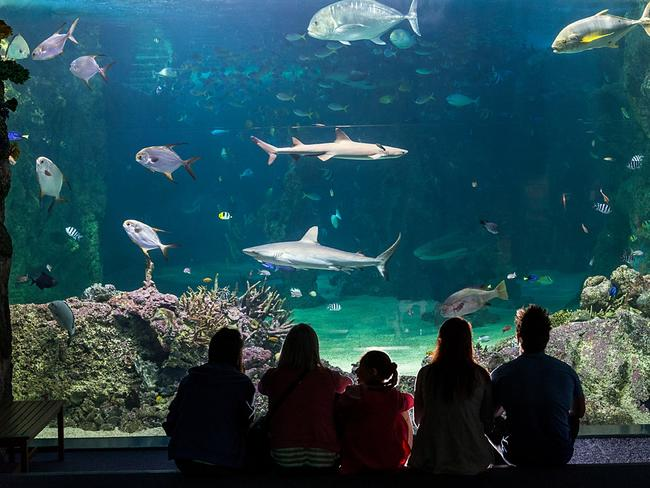 Come face to fin with sharks at SEA LIFE Sydney Aquarium.