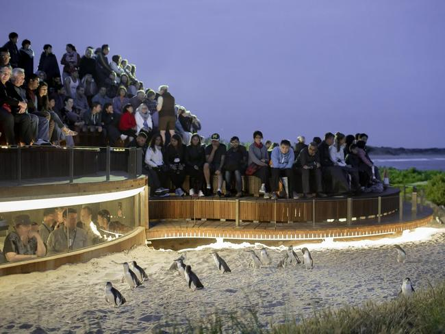MARCH WITH THE PENGUIN PARADE Two hours from Melbourne's CBD, Phillip Island is a day trip dream. Visit the beach, explore the shops and take your kids to see the incredibly cute Penguin Parade when tickets are back on sale.