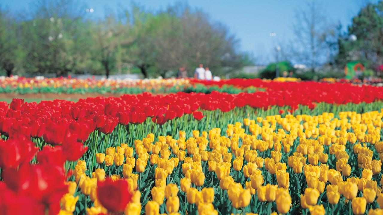 Generic pic of Floriade in Canberra.