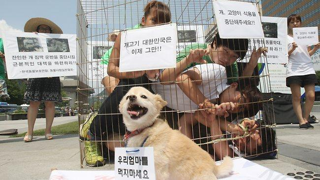 Reward offered in South Korea to find burning dog culprit | Adelaide Now