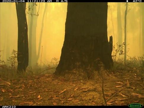 Wildlife Swept Up in Australia Bushfire Spotted in Timelapse Video