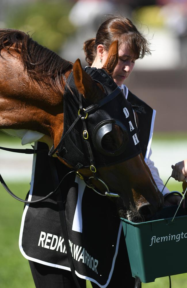Redkirk Warrior drinks water from a bucket after building up a decent thirst down the Flemington straight. Picture: AAP