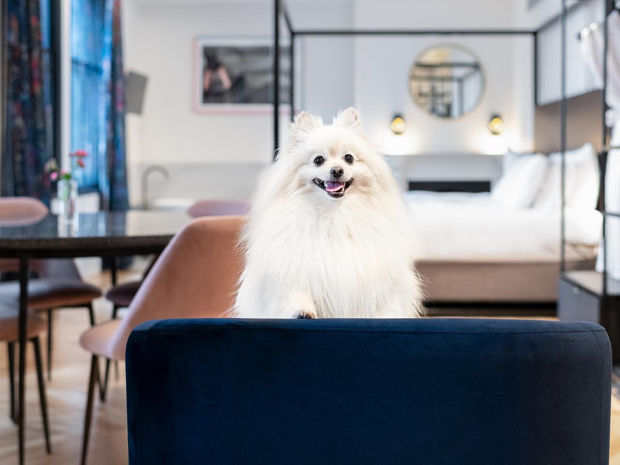 Pet-friendly accomodation at Litlle Albion, Sydney.