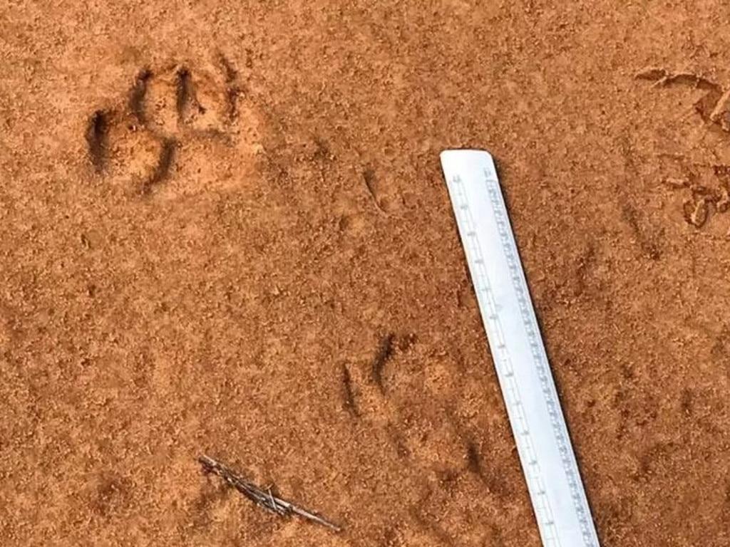 Footprints taken by Neil Waters.