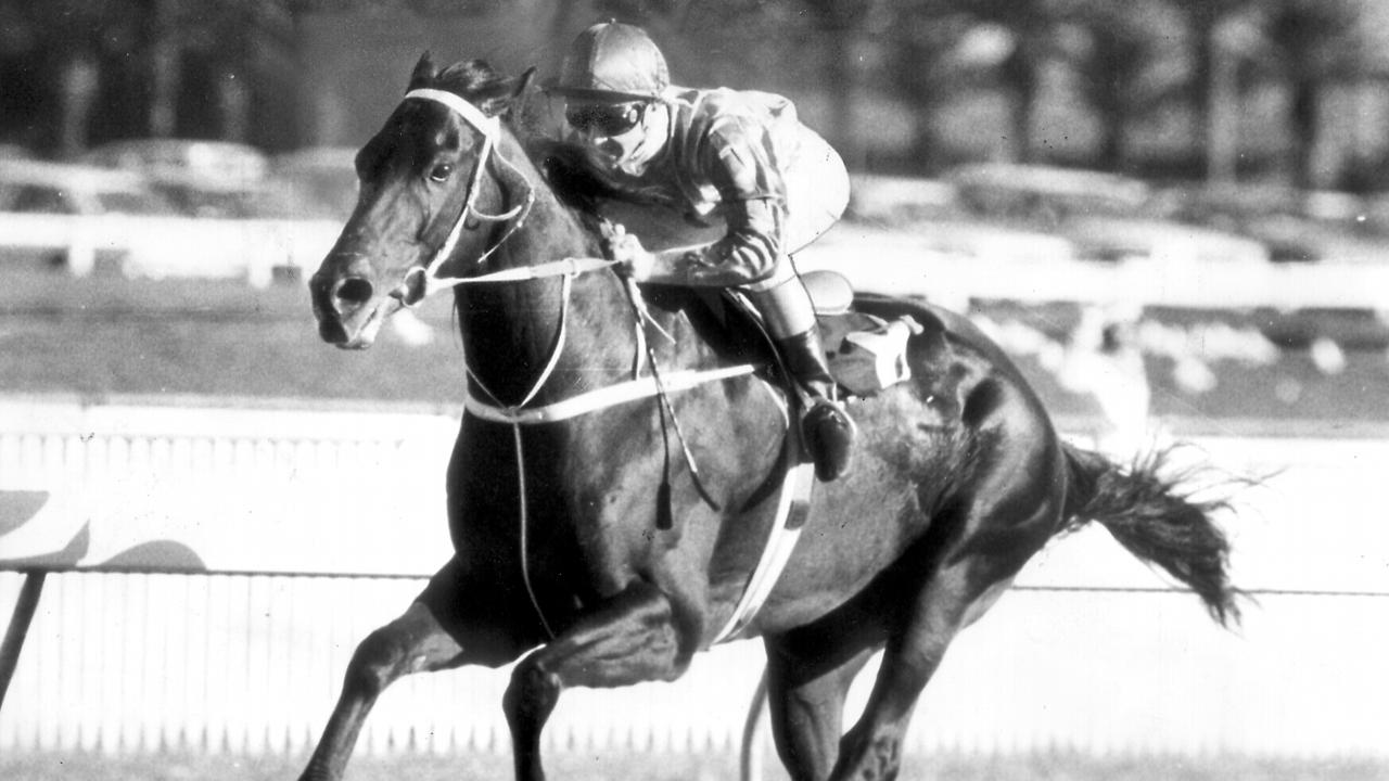 Kingston Town won the Group 1 George Main Stakes in 1981, just a week after breaking the $1 million prizemoney barrier, and scored again in 1982.