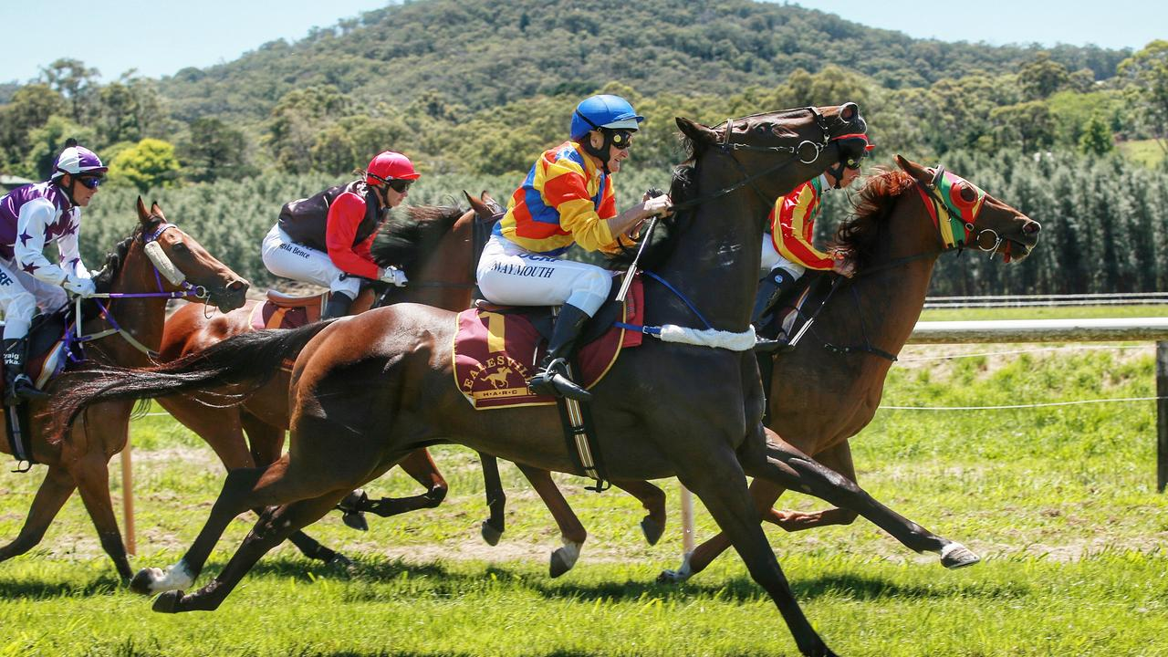 Healesville picnic races on Saturday.