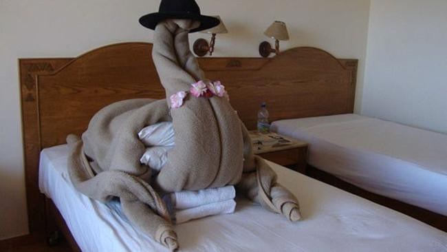 This guest requested a camel in his hotel room, and this greeted him upon entry. That is absolutely worth a five-star review on TripAdvisor. It even seems to be wearing a bra made out of a floral lei. It's all about attention to detail. Picture: Imgur