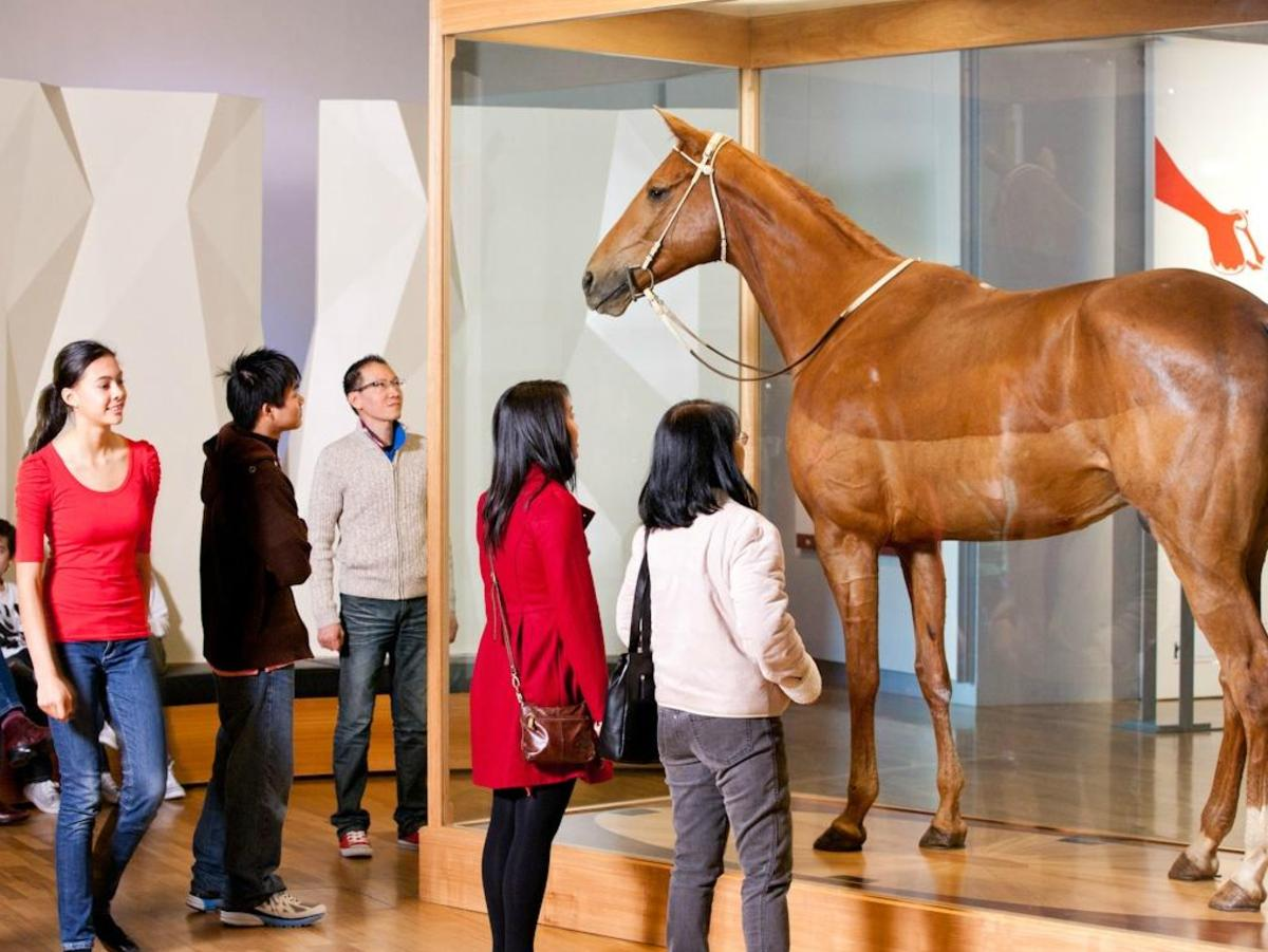Phar Lap is one of the Melbourne Museum's best loved attractions.