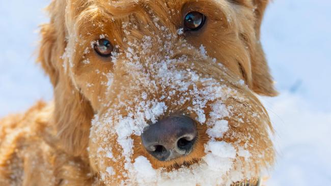 1/10'Frosted' flakes In February, a narcotics dog called Bico was on the job in Ohio when a shipment caught his attention. At first glance it was 19 kilos of cornflakes but these turned out to be frosted with cocaine valued at over $4 million dollars.