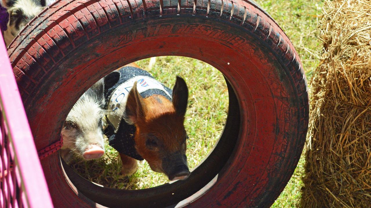 Sandy Creek Pig Races
