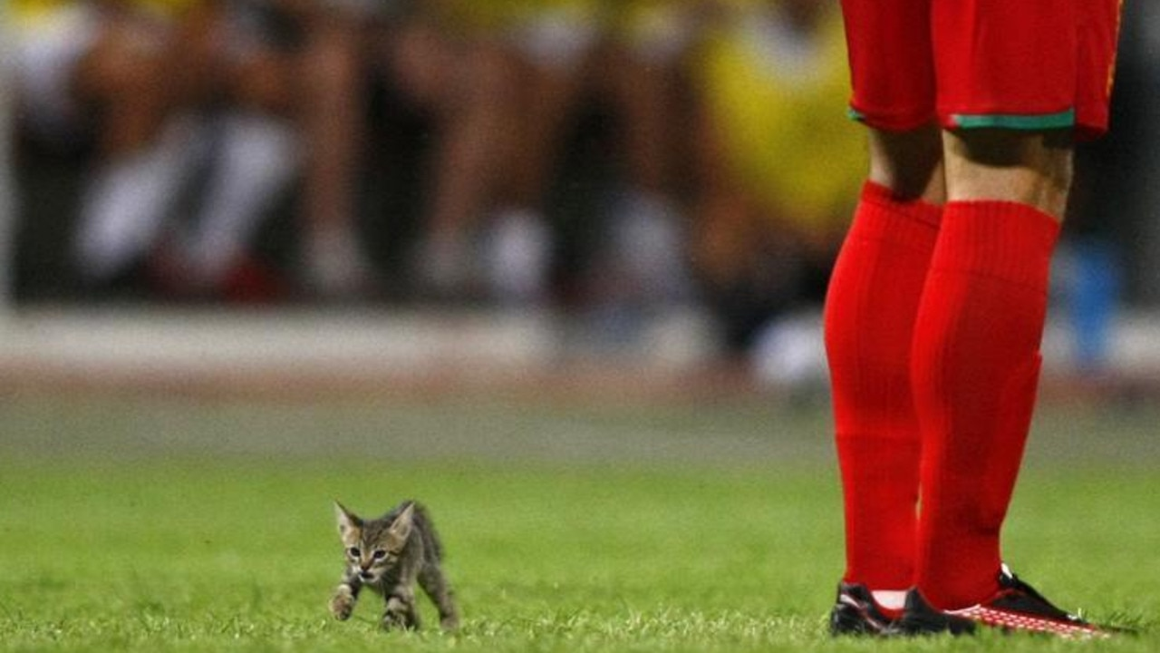 A kitten strays onto the pitch during the Super Cup final between Birkirkara and Valletta at Ta' Qali National Stadium outside Valletta, August 2010. REUTERS/Darrin Zammit Lupi