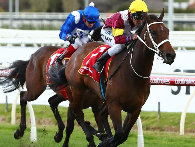 Luckless stayer bounds into Cup calculations