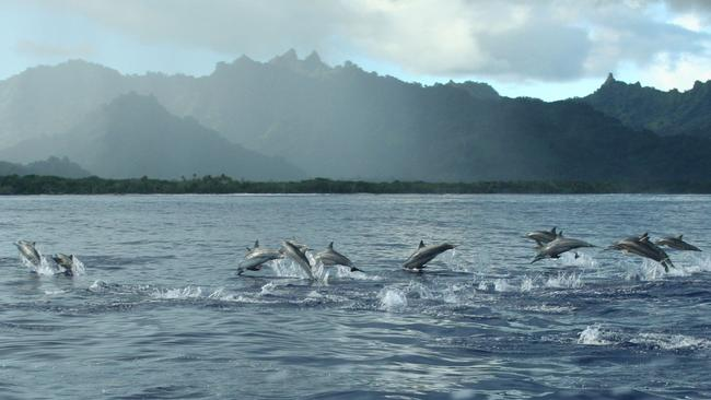 Dolphins swim among the islands.