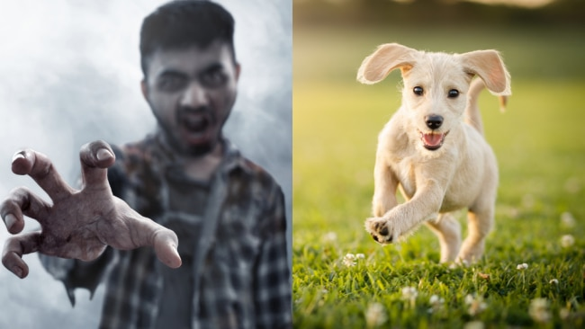 Are you a zombie or a puppy? Image: iStock