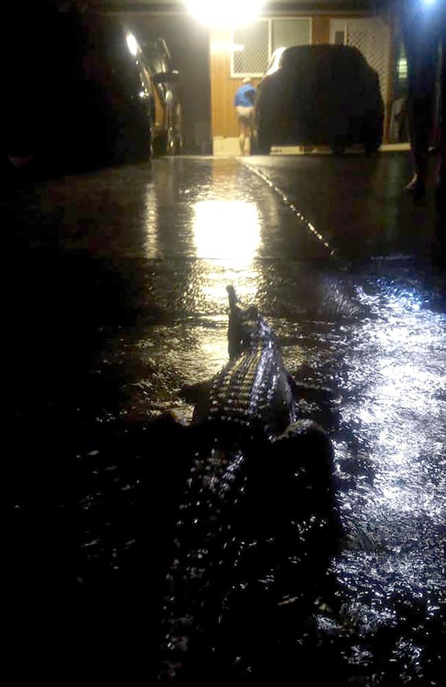 The crocodile sitting near Ms Hahn's house. Picture: Erin Hahn/AFP