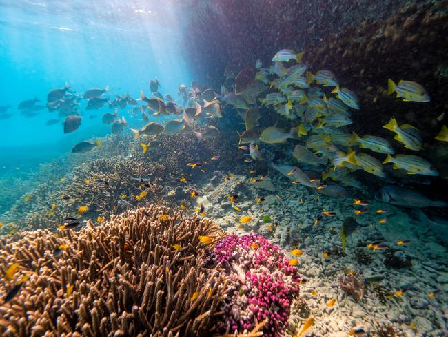 CORAL GARDEN The coral gardens around Heron Island are exceptional. As a scUber rider, you're able to get right up close to this coral, even as close as a couple of metres and all from the airconditioned comfort of the submarine. Picture: Mark Fitz