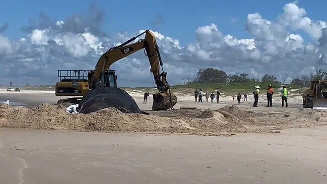 SPERM WHALE CARCASS IN SOUTH BALLINA
