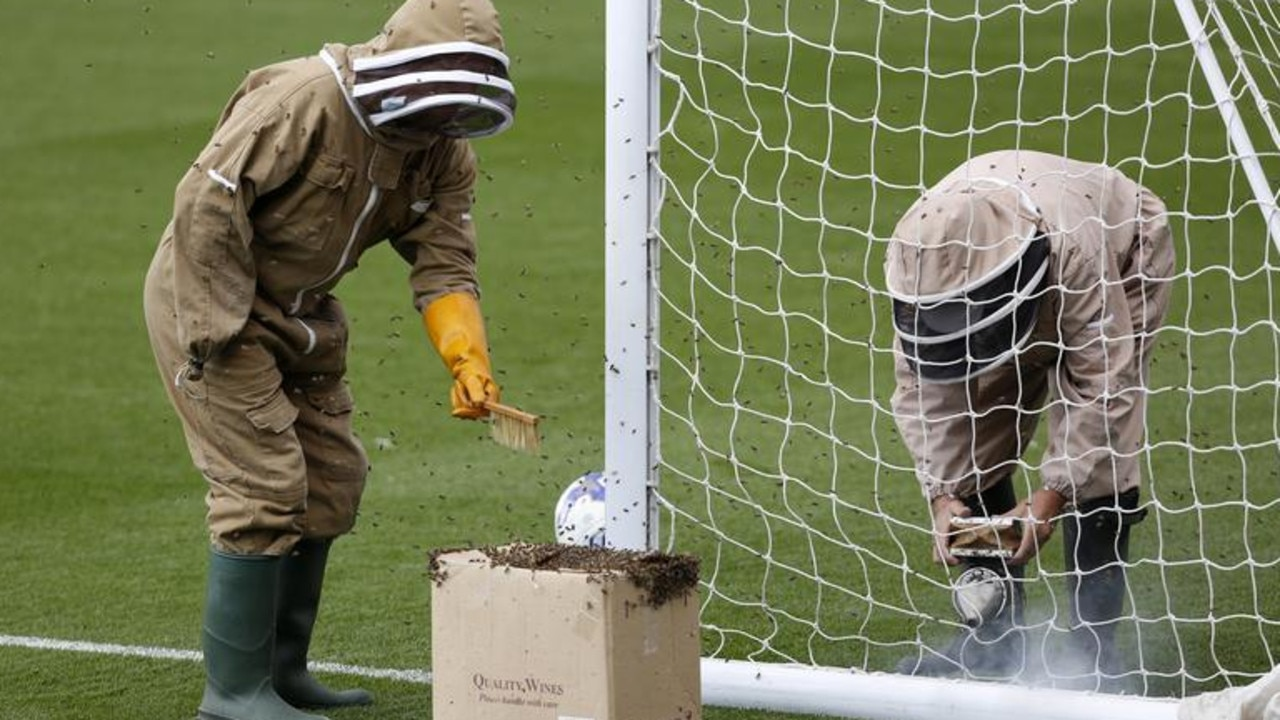 A bees nest is removed from the goal posts before a game between the Blackburn Rovers and Oldham Athletic in Oldham, Britain, July 2015. Action Images/Ed Sykes