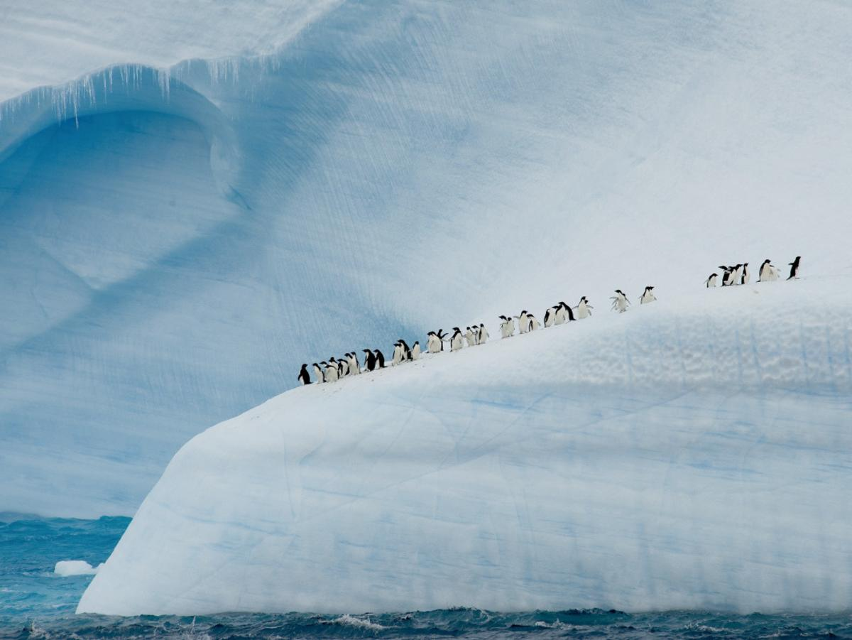 Ponant Antarctic cruise, for Brad Crouch story, March 20. Picture: Ponant