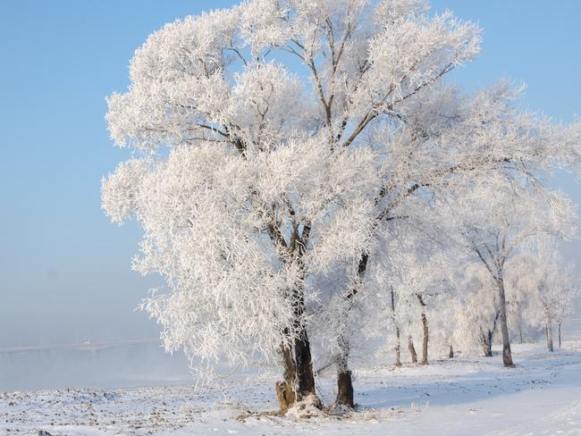 RIME ICE TREES Dusting tree branches and flowers in fine, feathery crystals, this elusive phenomenon is celebrated locally each year with the Jilin International Rime Ice and Snow Festival. There's a very small window within which to view the rime-covered flora; typically in January and only for an average of nine days.