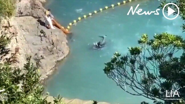 Shocking way baby dolphins are killed